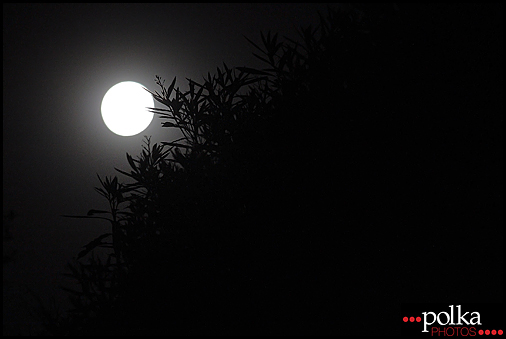 moon, trees, night, Playa del Rey, California