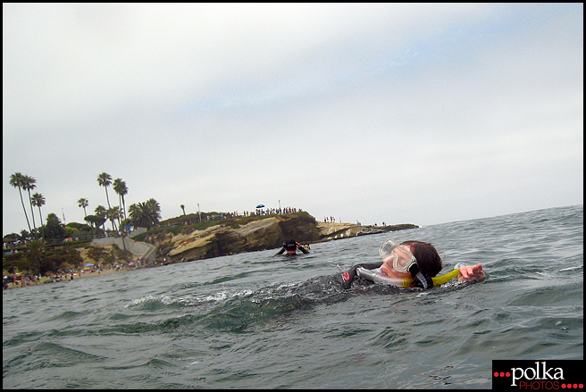 La Jolla snorkeling, snorkeling, La Jolla Cove, California, fish, ocean
