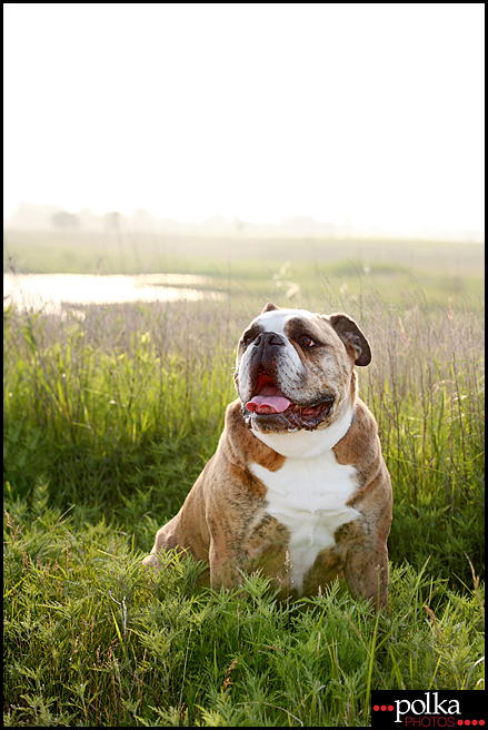 Los Angeles pet photographer, Los Angeles dog photography, Los Angeles portrait photography, dog portrait photographer