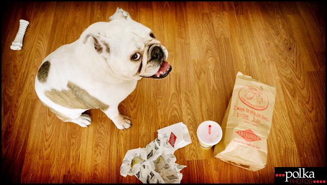 Los Angeles pet photographer, Los Angeles dog photographer, Los Angeles portrait photographer, dog portrait