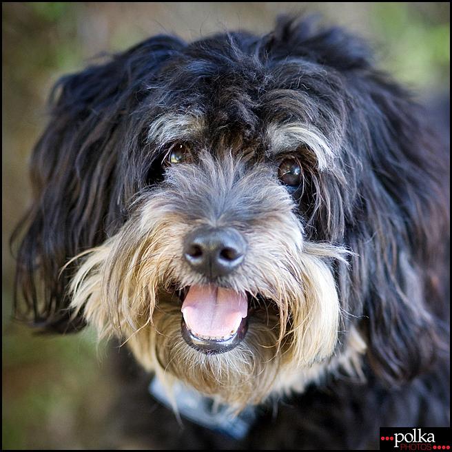 Los Angeles pet photographer, Los Angeles dog photographer, Los Angeles dog portrait photographer, dog portraits, Playa del Rey pet photos