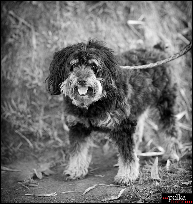Los Angeles pet photographer, Los Angeles dog photographer, Los Angeles dog portrait photographer, dog portraits