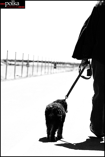 Los Angeles pet photographer, Los Angeles dog photographer, Los Angeles dog portrait photographer, dog portraits