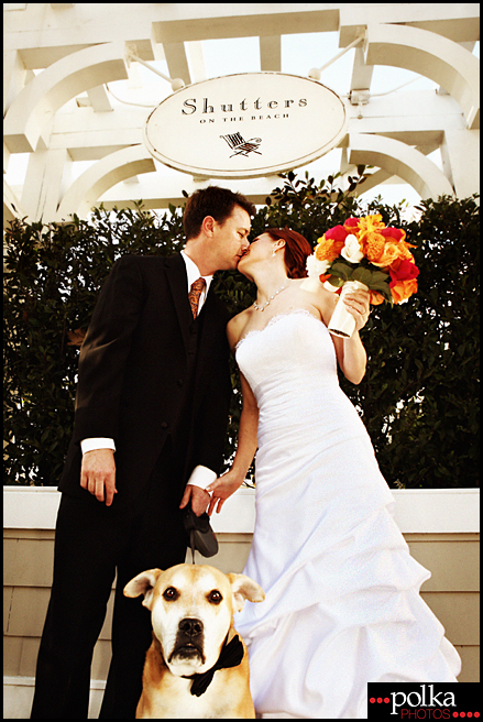 Los Angeles wedding photographer, Los Angeles dog photographer, Los Angeles, weddings, dogs