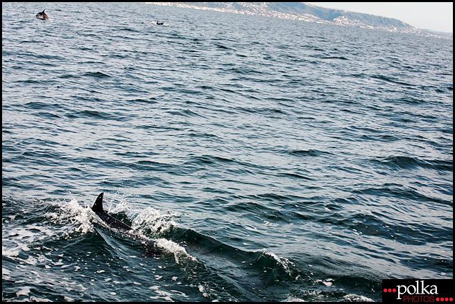 dolphins, Los Angeles photographer, Balboa Island