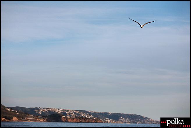 Los Angeles photographer, seagull, Balboa Island