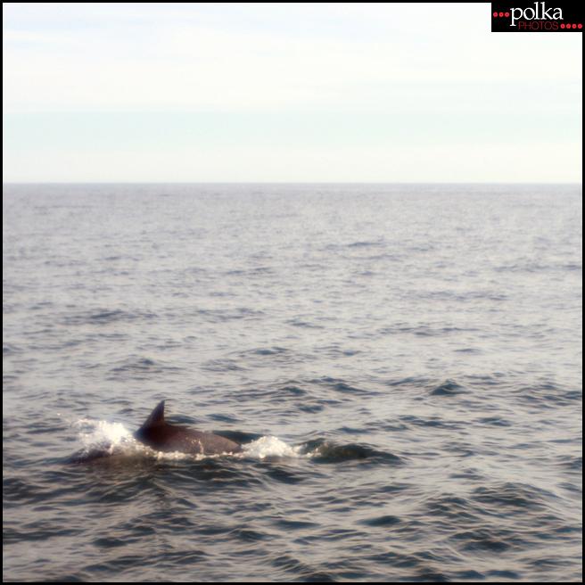 Balboa Island photography